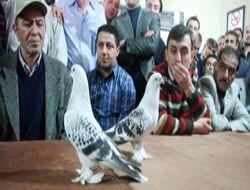 Türk güvercinleri tescil edilecek!..