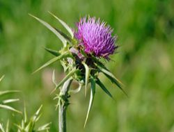 Erzurum endemik bitki zengini!..