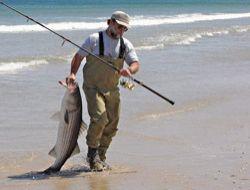 Yayın balıkların nesli tükeniyor!..