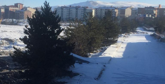 Erzurum'da ağaçları böyle katlettiler...