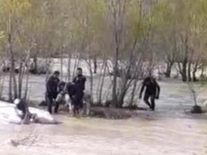 Aras Nehri'ne düşen danayı AFAD kurtardı