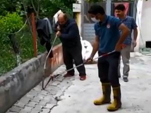 Bir mahallenin yılan seferberliği