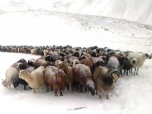 Doğu Anadolu'nun yüksek kesimleri beyaza büründü