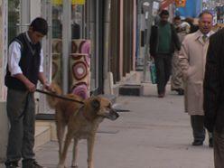 Cadde üzerindeki köpek turlarına tepki