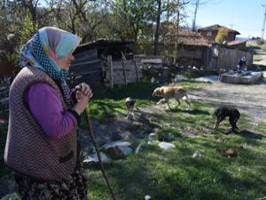 Köyü uyuz ve hastalıklı köpekler bastı