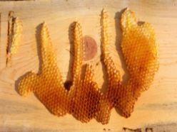Arılar kovanın gövdesine Allah yazdı