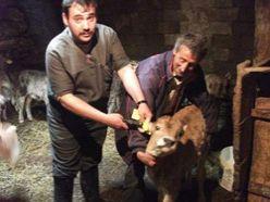 Hınıs'ta nöbetçi veteriner hekim uygulaması