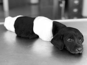 Yavru köpek vahşetiyle ilgili soruşturma başlatıldı
