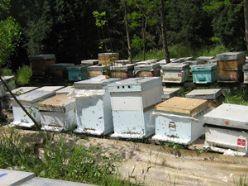 Erzurum'da arı kovanları çalındı