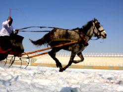 Atlı kızak yarışları nefes kesti