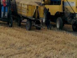 Biçerdöverle hasat kontrolleri devam ediyor
