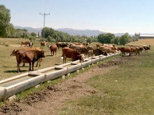 DAP İdaresi, 25 bin 213 adet sıvat dağıttı