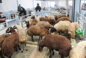 Erzurum'da hayvan pazarı doldu taştı