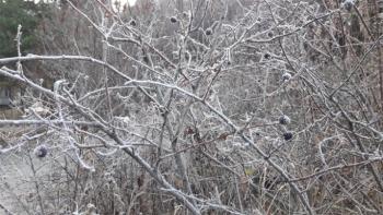 Kars, eksi 5'i gördü