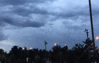 Kuşların gökyüzünde muhteşem dansı
