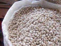 İspir fasulyenin üretimi artacak!..