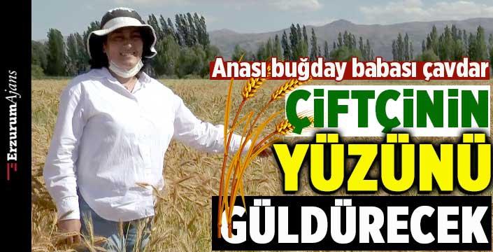 Islah ettiği buğdaya adını verdi