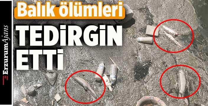 Kars Çayı'nda toplu balık ölümü