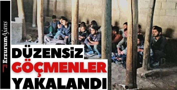 Ahırda 42 kaçak göçmen!